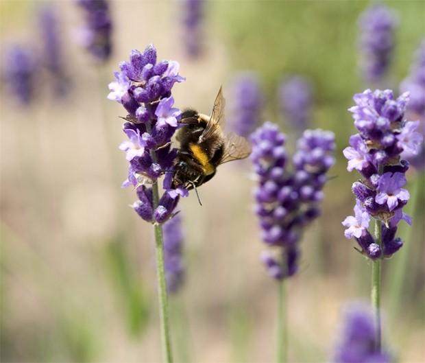 Tænk dig om før du klasker en bi